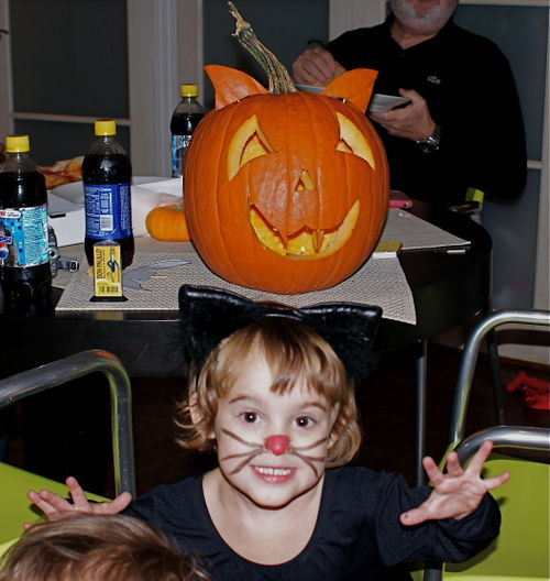 T cat pumpk